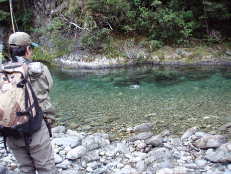 Japanese Fly fisherman - Heli fishing Dry Fly - a great hook up in Crystal clear water